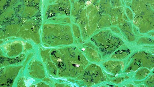 Mars-kolonizacija-crveni planet-uzgoj hrane na marsu-kolonizacija planeta-cijanobakterije na marsu
