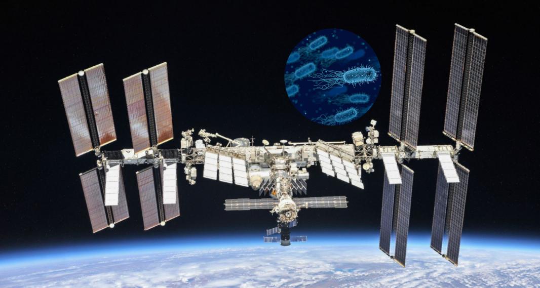 bakterija-na-ISS