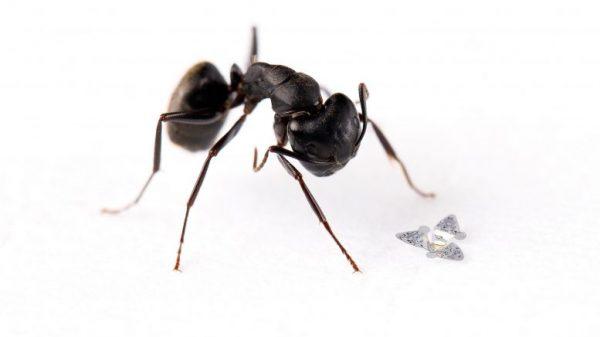 Mikročip pored mrava. Izvor: Northwestern University.